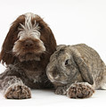 Puppy And Rabbt by Mark Taylor