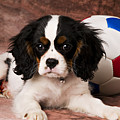 Puppy With Ball by Garry Gay