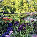 Purple Garden by David Lloyd Glover