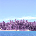 Purple Island by Barbara Marcus