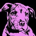 Purple Little Pittie by Dean Russo