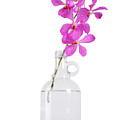 Purple Orchid Bunch by Atiketta Sangasaeng