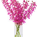 Purple Orchid In Vase by Atiketta Sangasaeng
