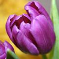 Purple Spring by Linda Sannuti