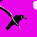 Quoth The Raven Nevermore . Magenta by Wingsdomain Art and Photography