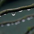 Rain Branch by Photography by Gordana Adamovic Mladenovic