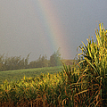 Rainbow Arching Into Field Behind Stream by Stockbyte