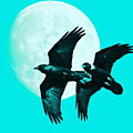 Ravens Of The Moon . Cyan Square by Wingsdomain Art and Photography
