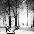 Red Benches In A Park by Jaroslaw Grudzinski