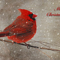 Red Bird In Snow Christmas Card Print by Lois Bryan