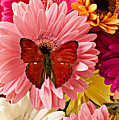 Red Butterfly On Bunch Of Flowers by Garry Gay