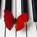Red Butterfly On Piano Keys by Garry Gay