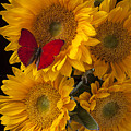 Red Butterfly With Four Sunflowers by Garry Gay