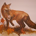 Red Fox by Ben Kiger