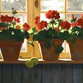 Red Geraniums Basking by Linda Jacobus