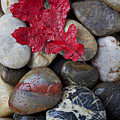 Red Leaf Wet Stones by Garry Gay