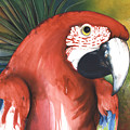 Red Parrot by Anthony Burks Sr