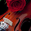 Red Rose With Violin by Garry Gay