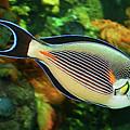 Red Sea Fish by Alessandro Matarazzo