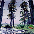 Redwood Reflections   by Donald Maier