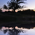 Reflecting Tree by Bill Cannon