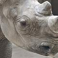 Rhinoceros by Tom Mc Nemar