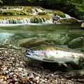 River Chrome by Alex Suescun
