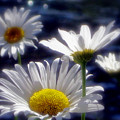 River Weed by Sandy Rubini