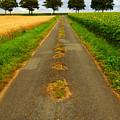 Road In Rural France by Elena Elisseeva