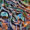 Roots And Rocks by Naman Imagery