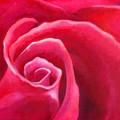 Rosey Lover by Angela Treat Lyon