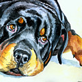 Rottweiler by Lyn Cook
