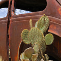 Route 66 Cactus by Mike McGlothlen