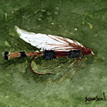 Royal Coachman Wet Fly by Sean Seal