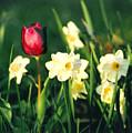 Royal Spring by Steve Karol