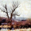 Rustic Reflections by Janine Riley