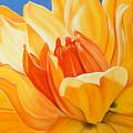 Saffron Splendour by Colleen Brown