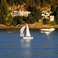 Sailboat In Vancouver by Robert Meanor