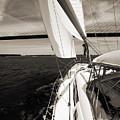 Sailing Under The Arthur Ravenel Jr. Bridge In Charleston Sc by Dustin K Ryan