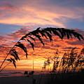 Sanibel Island Sunset by Nick Flavin