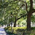 Savannah Benches by Carol Groenen