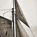 Schooner Pride Tall Ship Yankee Sail Charleston Sc by Dustin K Ryan