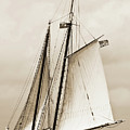 Schooner Sailboat Spirit Of South Carolina Sailing by Dustin K Ryan