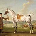 Scipio - Colonel Roche's Spotted Hunter by Thomas Spencer