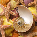 Sea Shells And Starfish by Garry Gay