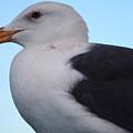 Seagull by Aidan Moran