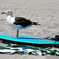Seagull On A Surfboard by Christine Till