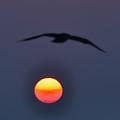 Seagull Sun by Bill Cannon