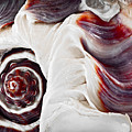 Seashell Detail by Elena Elisseeva