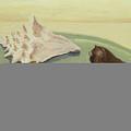 Seashells by M Valeriano